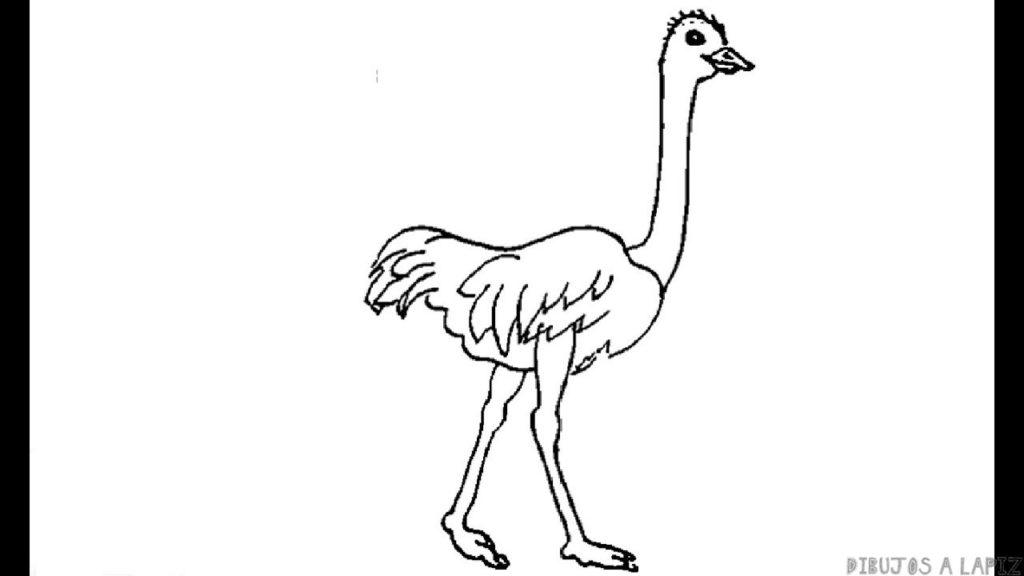 ᐈ Dibujos De Avestruztoplas Mejores Imágenes De Avestruz