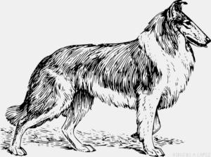 Como dibujar un Perro tierno