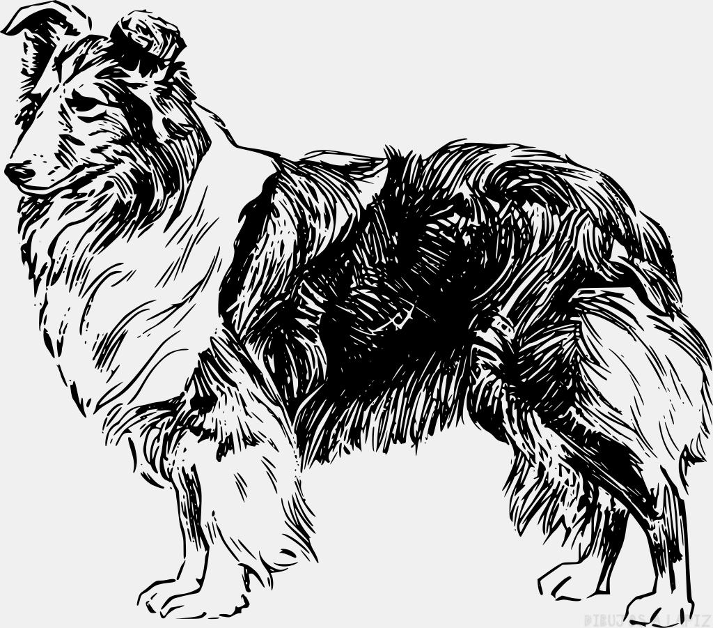 Dibujos de Perros a lapiz