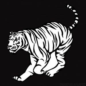 Tigres fotos gratis