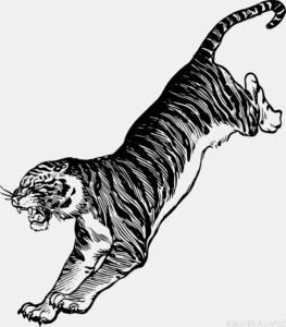 Tigres imagenes