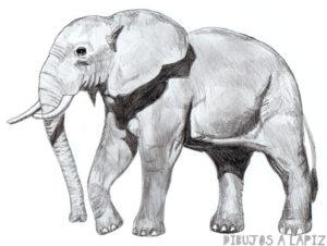 animales animados para dibujar