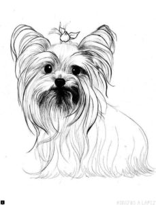 cachorros para dibujar