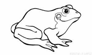 como dibujar una rana facil