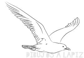 como se dibuja una gaviota
