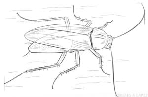 cucaracha para pintar