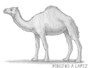 dibujos de animales a color