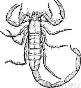 escorpion animado