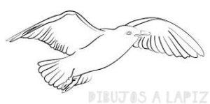 imagenes de las gaviotas