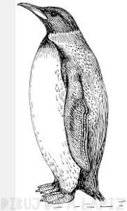 imagenes de pinguinos para imprimir