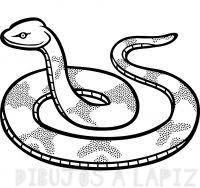 imagenes de serpientes para colorear
