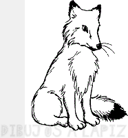 imagenes de un zorro para dibujar