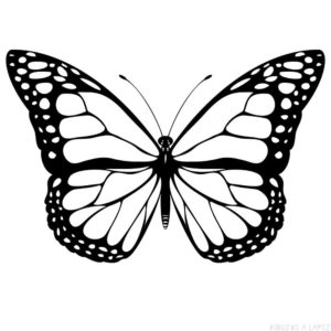 mariposas imagenes