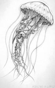 medusa dibujo