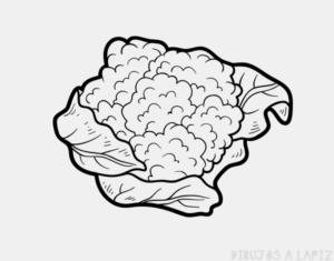 como sembrar coliflor