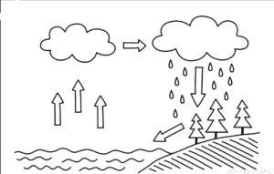 imagenes sobre el cuidado del agua scaled