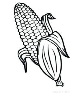 imagen de una planta de maiz