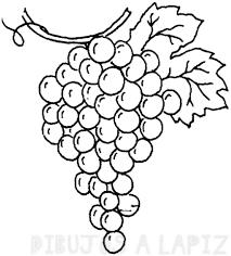imagenes de racimos de uvas