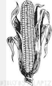 lamina del maiz