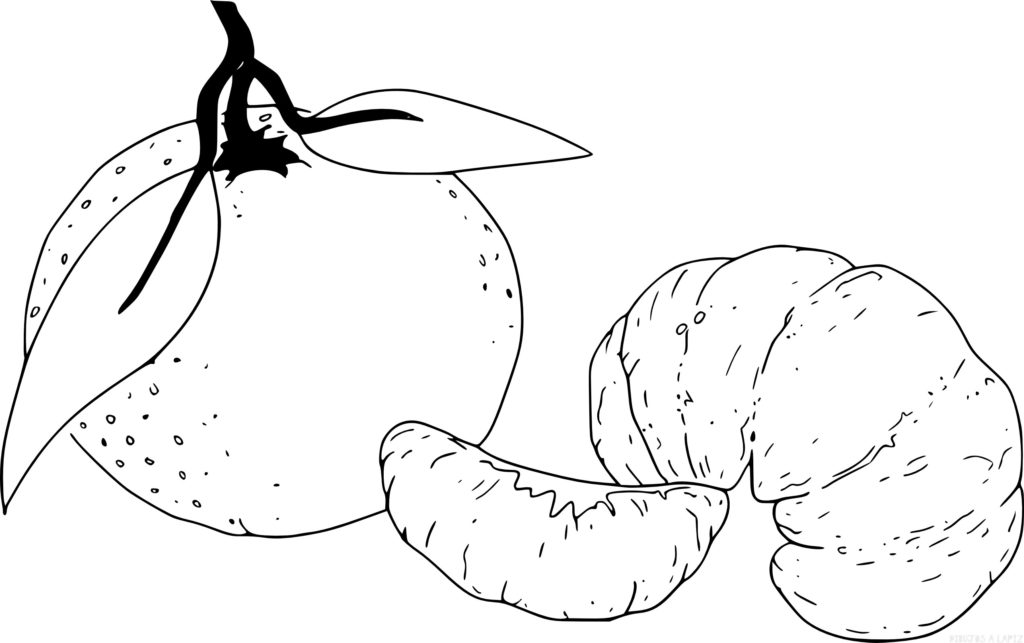 mandarina para colorear scaled