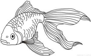 pescado para dibujar scaled
