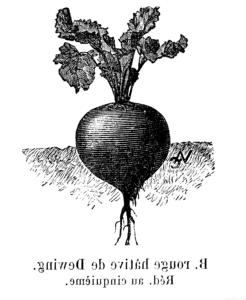 propiedades de las hojas de la remolacha scaled