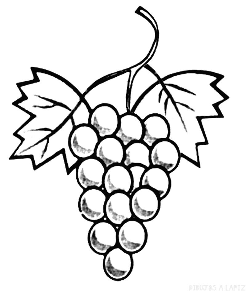 ᐈ Dibujos de Uvas【TOP 30】Viñedo de uva para pintar