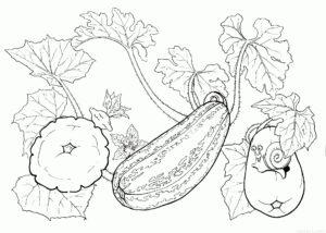 vegetales para colorear scaled