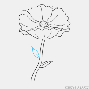amapolas fotos flor