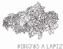 arbustos para dibujar