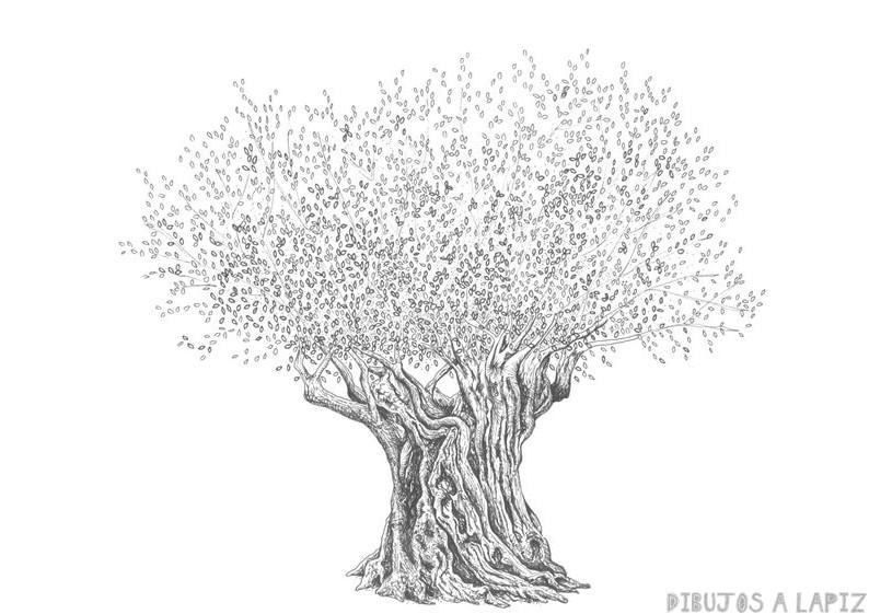 clases de dibujo olivos