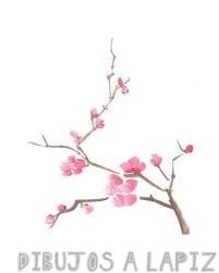 como dibujar flores de cerezo