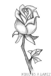 como se dibuja una rosa