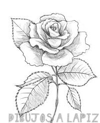 descargar imagenes de rosas
