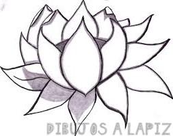 dibujo flor loto