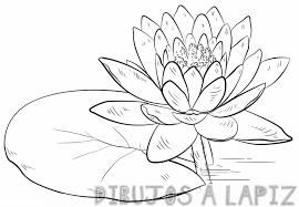 flor del loto imagenes