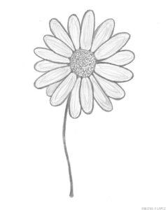flores de margaritas para pintar
