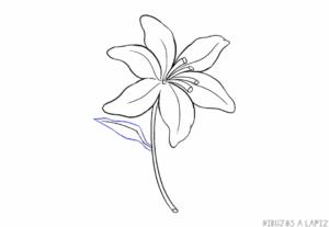 flores de orquideas imagenes