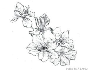 flores ilustracion