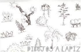 fotos de arbustos y sus nombres