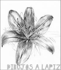 fotos de flor de azucena