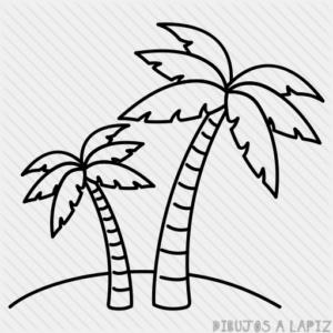 fotos de palmeras tropicales