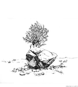 imagenes de arboles arbustos y hierbas para colorear