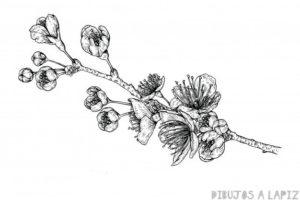imagenes de arboles de cerezo