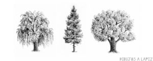 imagenes de arboles para dibujar
