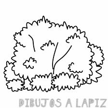 imagenes de arbustos con nombre