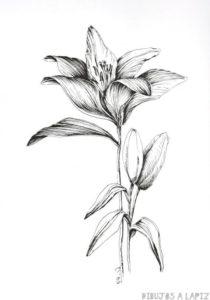 imagenes de flores para colorear