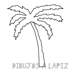 imagenes de palmeras de jardin