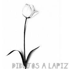 imagenes de tulipanes para dibujar