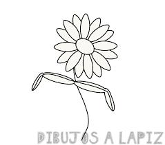 margarita flor dibujo